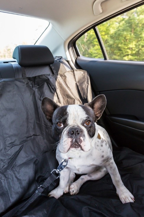 dog travel sickness, dog safety, pet car sickness, pet travel sickness, traveling with dogs